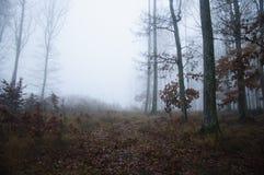 Dark foggy forest Stock Image