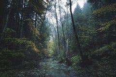 Dark foggy forest Stock Photos