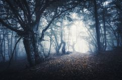Dark foggy forest. Mystical autumn forest with trail in fog. Old Tree. Beautiful landscape with trees, path, leaves and mist. Nature background. Spooky misty royalty free stock photography