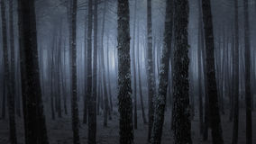 Dark foggy forest Royalty Free Stock Images