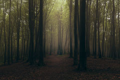 Dark foggy forest trail. Dark scary forest like a fairy tale Stock Images