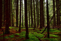 Dark foogy forest Stock Photography