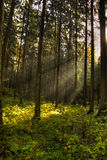Dark forest Stock Photo