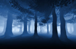 Dark forest. Dark blue forest with a ray of light