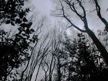 Dark forest. Epping forest Royalty Free Stock Image