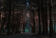 Dark forest Royalty Free Stock Image