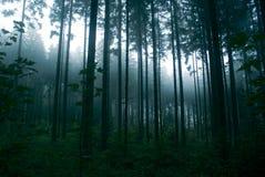 Dark Forest. Dark, misty forest at dawn Stock Images