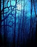 Dark forest. Scary forest with blue moonlight Royalty Free Stock Photography
