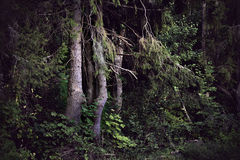 Dark forest Stock Photos
