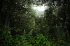 Dark forest Stock Image