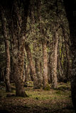 Dark forest. Deep Atlas mountain forest in the summer Royalty Free Stock Photo