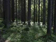 Dark forest Royalty Free Stock Photos
