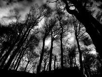 Dark forest. A beech forest in the wilderness Royalty Free Stock Photography