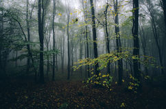 Dark forest in autumn with fog Stock Image