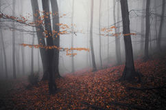 Dark forest in autumn with fog Royalty Free Stock Photography