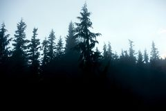 Dark Forest Background Royalty Free Stock Image
