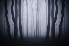 Dark forest background with surreal fog royalty free stock photography