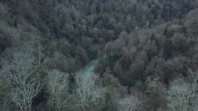 Dark forest with black trees. Clip. Top view of the gloomy gray forest. Dark forest with gray flowers frightening. Consciousness stock footage