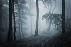 Dark forest with blue fog in late autumn Stock Photo