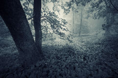 Dark forest with blue fog after rain Royalty Free Stock Images