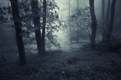 Dark forest with blue haze Stock Photo