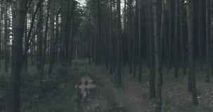 Dark Forest Cinematic. Slow Movement Trough Dark Forest Cinematic Video stock video footage