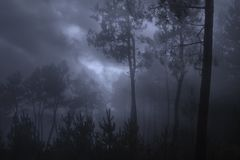 Dark forest in a cloudy night. Mysterious forest in a cloudy, foggy and cold night royalty free stock photos