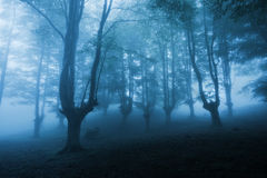 Dark forest with dense fog Royalty Free Stock Photos
