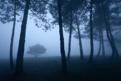 Dark forest with dense fog Royalty Free Stock Photo