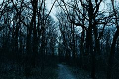 Dark Forest. Dusk at a Forest in Serbia. It`s autumn and spooky stock photography