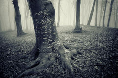 Dark forest with eerie looking trees on halloween. Dark forest with eerie looking trees in late autumn on halloween royalty free stock photo