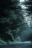 Dark forest with empty road in receding light Stock Photography