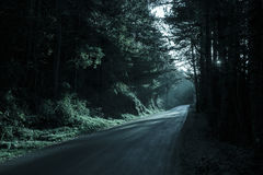 Dark forest with empty road in receding light Royalty Free Stock Photography