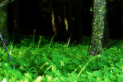 Dark Forest Entrance. Looking into a dark forest from an outside clover field Stock Photos