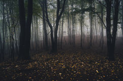 Dark forest with fallen leaves on the ground in autumn Stock Photography