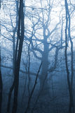 Dark forest with fog. And cold light Royalty Free Stock Images