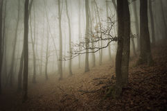 Dark forest with fog on halloween Stock Photography