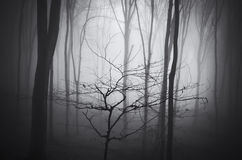 Dark forest with fog on Halloween Royalty Free Stock Photography