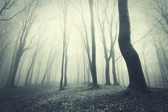 Dark forest with fog in late autumn Stock Image