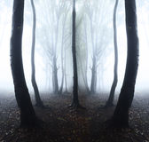 Dark forest with fog Stock Photo