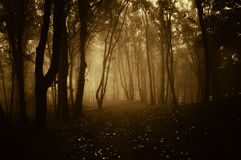 Dark forest with fog at sunset Stock Photo