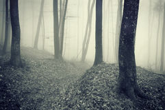 Dark forest with fog between trees Stock Photos