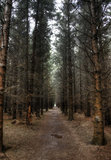 Dark forest footpath Stock Photography