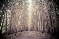 Dark forest grove with trees growing Royalty Free Stock Photo