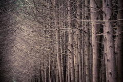 Dark forest grove with trees growing Stock Photography