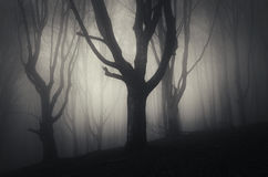 Dark forest on Halloween night Royalty Free Stock Image