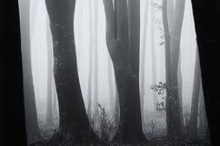 Dark forest on Halloween night Stock Photos