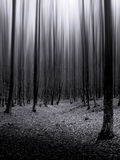 Dark forest with infinite trees Royalty Free Stock Photo
