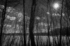 Dark forest on the lake. Black and white landscape photography Stock Images
