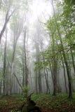 Dark forest landscape. Autumn summer dark forest landscape Stock Photo